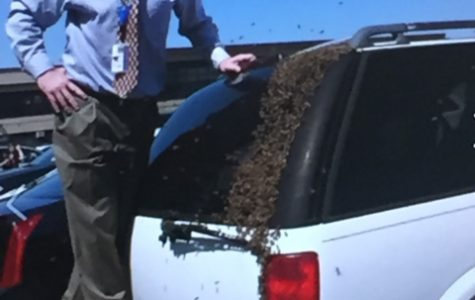 Lord of the bees: MHS administrator has a unique hobby